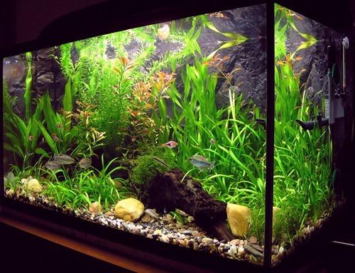 fish-tank-(40)