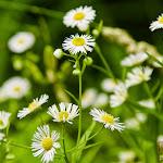 Flower 027_1280px.jpg