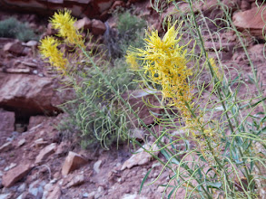 Photo: One of many types of pretty yellow flowers
