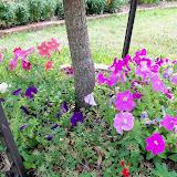 Gardening 2011 - 100_8695.JPG