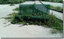 Panchina avvolta dalle erbacce