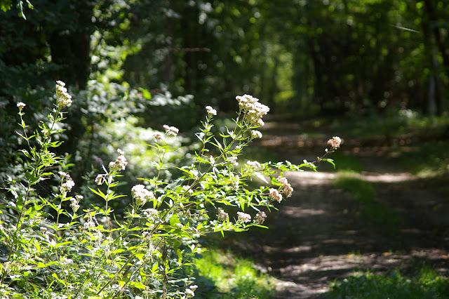 Les Hautes-Lisières (Rouvres, 28), 2 septembre 2011. Photo : J.-M. Gayman