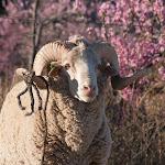 IMG_2081 Lesotho, Malealea, 2005.jpg