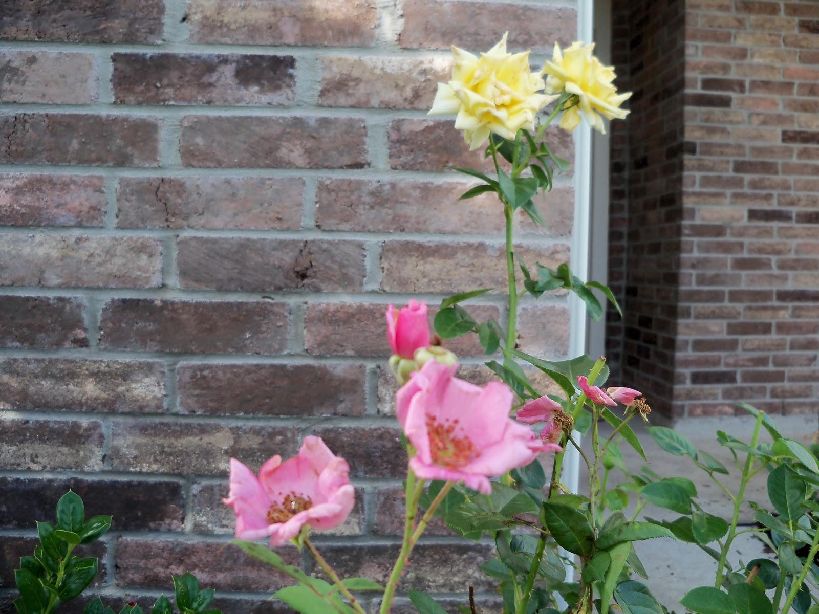 Gardening 2010, Part Two - 101_2318.JPG