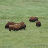 05-11-12 Wildlife Prairie State Park IL - IMGP1556.JPG