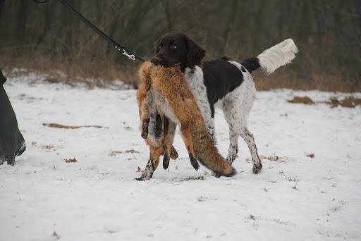met vos/with fox/mit Fuchs