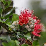 Hawaii 2013 - Best Story-Telling Photos - IMGP7882.JPG