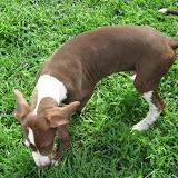 Jasper @ 3 months