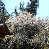 2014 Japan - Dag 7 - tom-SAM_0452-0022.JPG