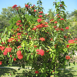 Tree Fruit - IMG_0917.JPG