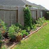 Gardening 2010, Part Two - 101_2746.JPG