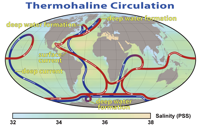 Thermohaline circulation in the world's oceans. Graphic: Earth Institute