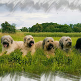 Unsere Hunde 2016 (Handyfotos)