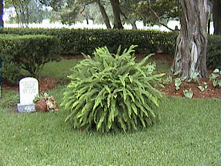 1640A_Southern_Mansion_Garden_-_New_Orleans