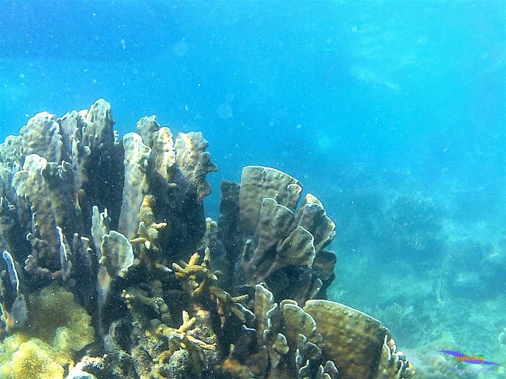 Pulau Harapan, 23-24 Mei 2015 GoPro 32
