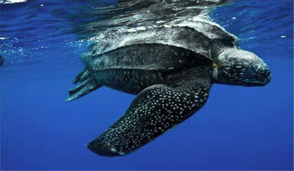 Arrecife de Komodo