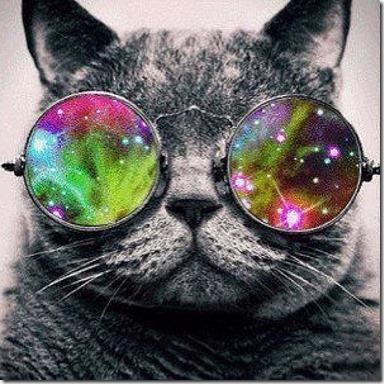 gatos galacticos  (2)