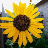 Gardening 2010, Part Three - 101_3985.JPG