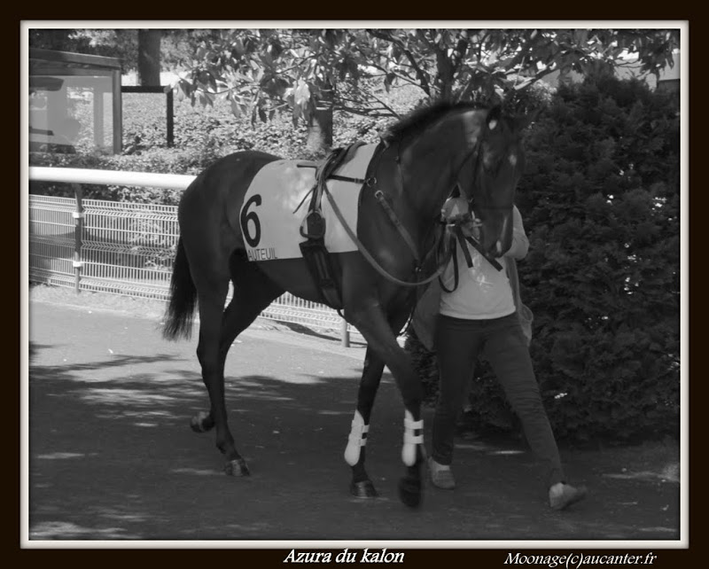 Photos Auteuil le 21-06-2014 IMG_2045