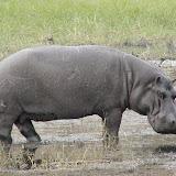 Zambia, Botswana, and Zimbabwe, 2004
