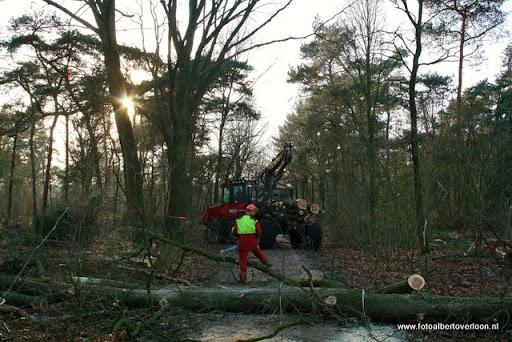 Houtoogst in de bossen van overloon 17-01-2012 (15).JPG