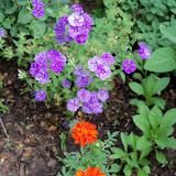 Gardening 2011 - 100_8163.JPG