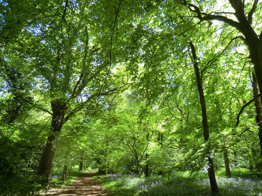 CIMG8095 Staffhurst Wood in spring