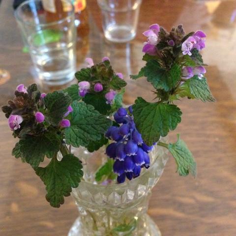Gepflückte Blümchen in Vase