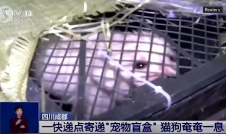 """Κίνα : Νέα μόδα με """"τυφλά"""" δέματα που περιέχουν μέσα κατοικίδια - Αρκετά ζώα βρήκαν φρικτό θάνατο"""