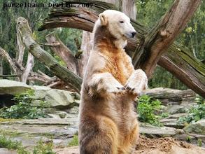 Photo: Knut will beeindrucken ;-)