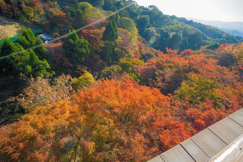 京都 紅葉 清水寺 写真5
