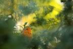 ROUGE GORGE   Et jaune ambiance