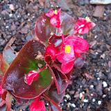 Gardening 2010 - 101_0505.JPG