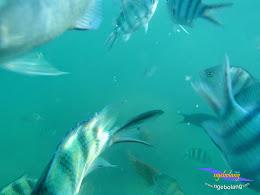 pulau pari 27-28 september 2014 pan 18