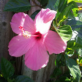 Gardening 2013 - IMG_20130413_110334.jpg