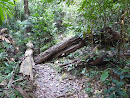 Khao Yai National park - trail to Mo Sing - deserted (only one couple) but partially signposted and without problems with navigation, just exhausting with a lot of leeches - fallen trees on trail