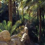 Buraïmi (Oman)