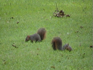 1510Squirell