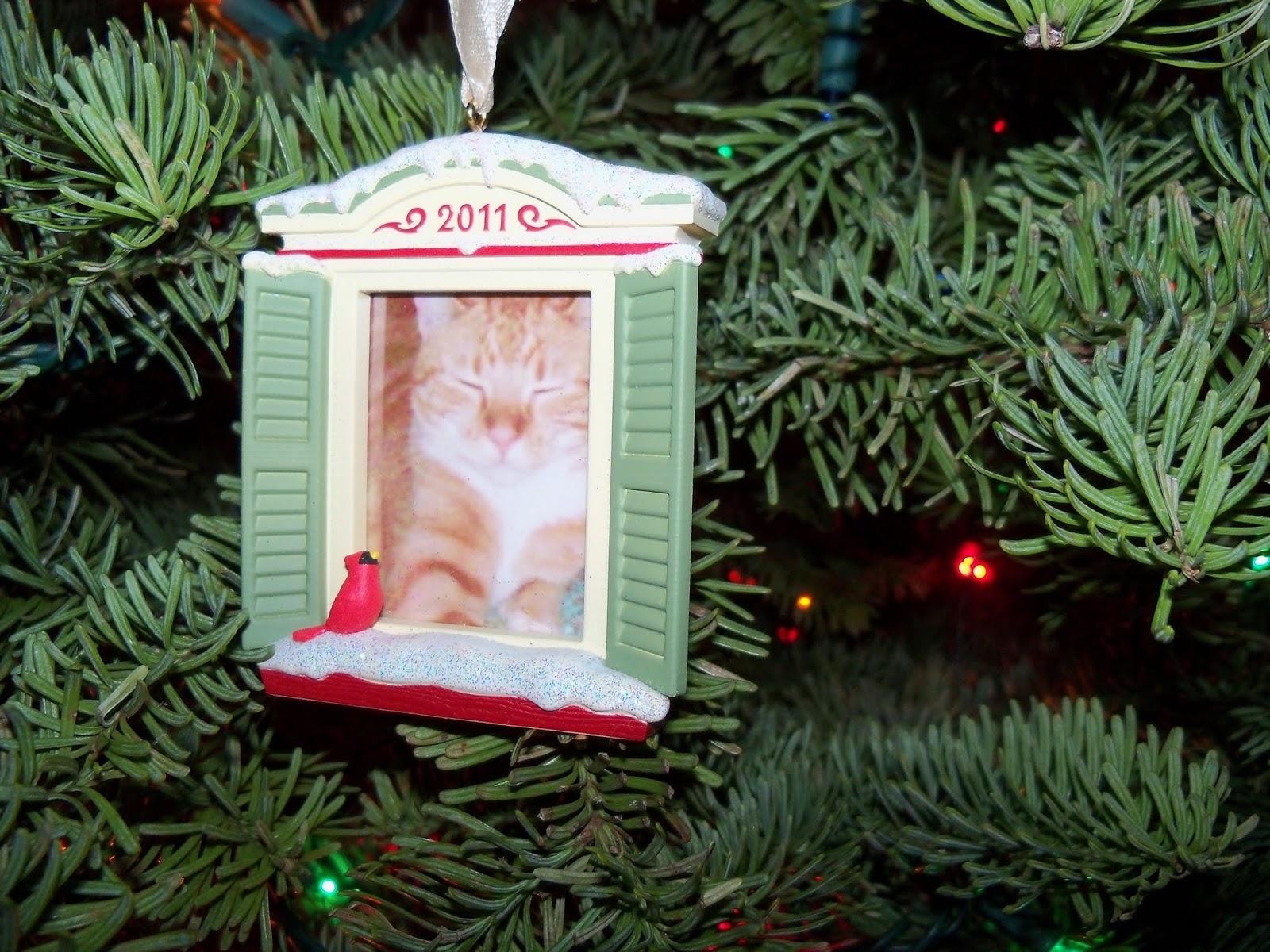 Christmas 2012 - 115_4826.JPG