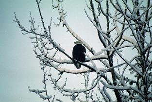 a1-eagle2