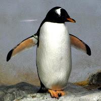 Vincent Jager's avatar