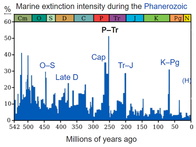 Plot of extinction intensity (percentage of marine genera that are present in each interval of time but do not exist in the following interval) vs time in the past. Geological periods are annotated (by abbreviation and colour) above. The Permian–Triassic extinction event is the most significant event for marine genera, with just over 50 percent failing to survive. Graphic: Wikimedia Commons