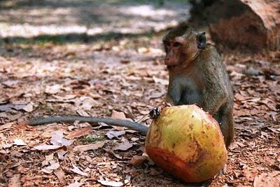 Cái bẫy khỉ: Nguyên nhân của khổ đau