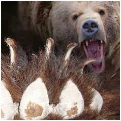 Злость жены изменяет взгляд ее и делает лице ее мрачным, как у медведя