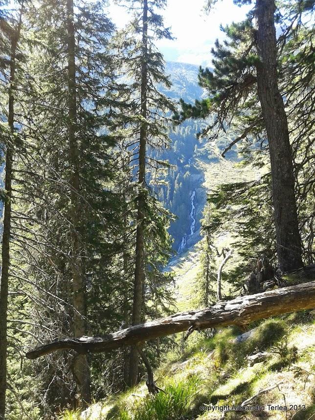 Zarim din padura Cascada Ciumfului (Ciomfu)