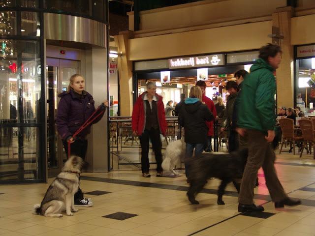 KNON puppys in de stad nov 2008 - DSC09019.JPG
