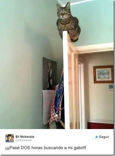 humor twits de gatos (4)