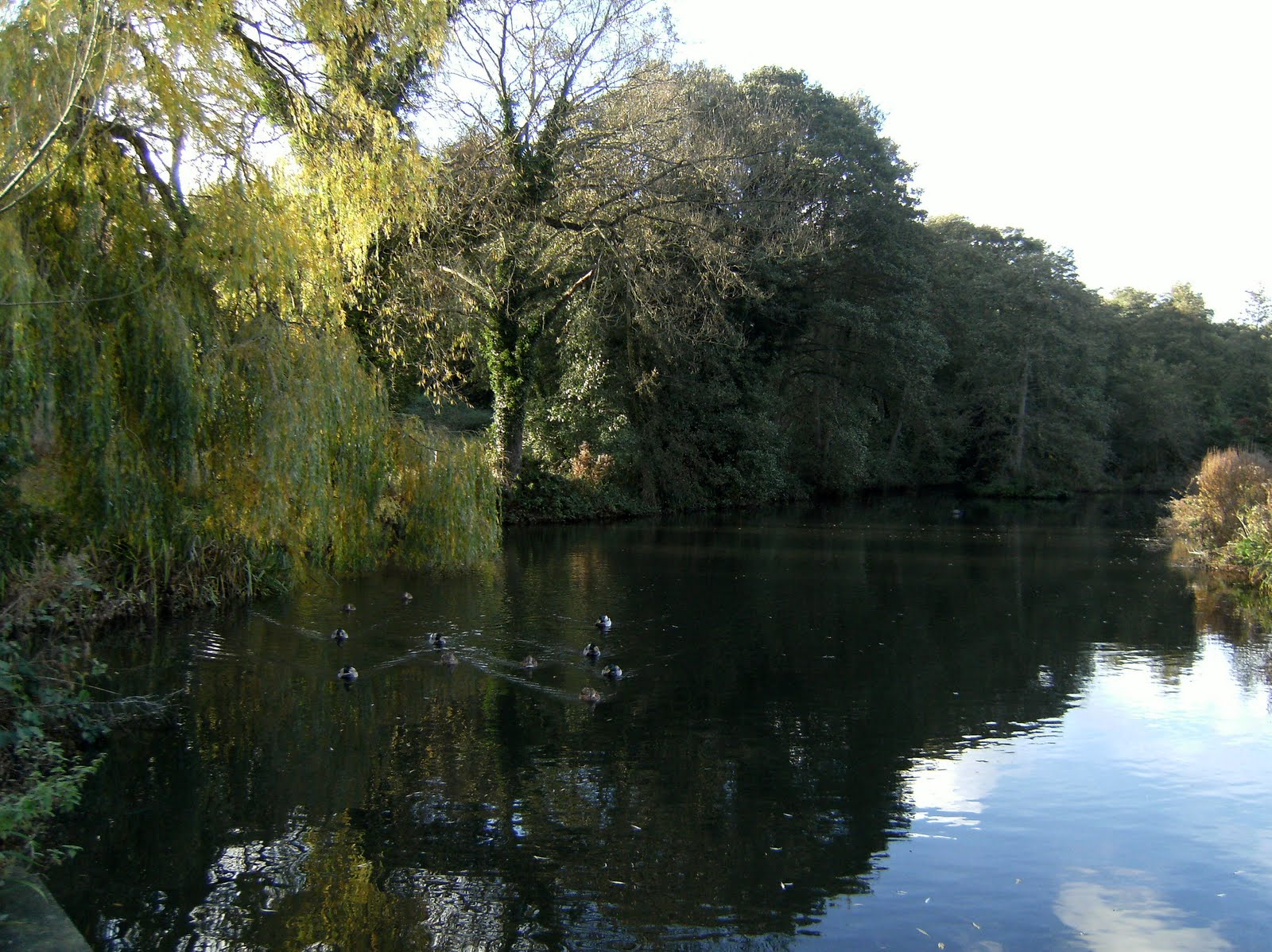 1010300054 Oxted Mill pond