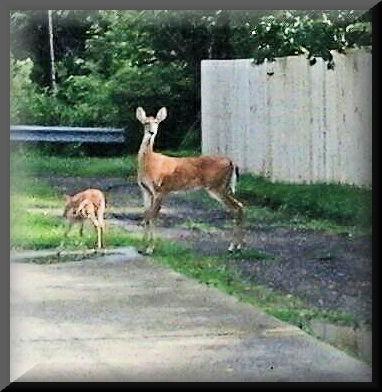 [deer%5B7%5D]