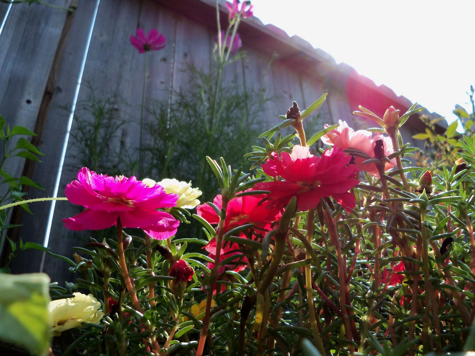 Gardening 2010, Part Two - 101_3471.JPG